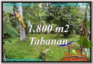 TANAH di TABANAN JUAL MURAH 18 Are View kebun dan sungai