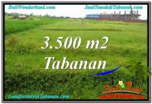 TANAH MURAH DIJUAL di TABANAN BALI 35 Are di Tabanan Kerambitan