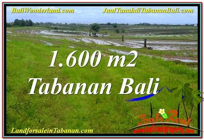 TANAH MURAH  di TABANAN BALI DIJUAL 16 Are View Laut, Gunung dan sawah