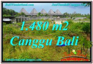 JUAL TANAH di CANGGU Untuk INVESTASI TJCG212