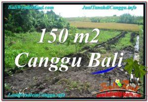 JUAL MURAH TANAH di CANGGU BALI 1.5 Are di Canggu Pererenan