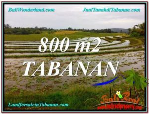 DIJUAL TANAH MURAH di TABANAN BALI 800 m2 di Tabanan Selemadeg