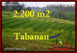 INVESTASI PROPERTI, TANAH MURAH DIJUAL di TABANAN BALI TJTB269