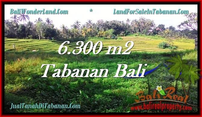 TANAH di TABANAN JUAL MURAH 6,300 m2  view Sawah dan Gunung