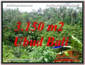DIJUAL TANAH MURAH di UBUD Untuk INVESTASI TJUB608