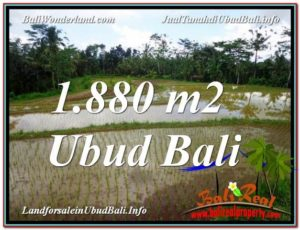 JUAL TANAH MURAH di UBUD 1,880 m2 di Ubud Tegalalang