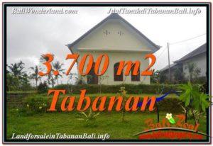 TANAH MURAH DIJUAL di TABANAN 37 Are di Tabanan Penebel