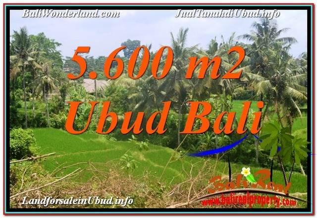TANAH DIJUAL MURAH di UBUD 5,600 m2 di Sentral / Ubud Center