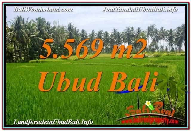 TANAH di UBUD DIJUAL MURAH 5,569 m2 View Sawah dan Sungai Kecil