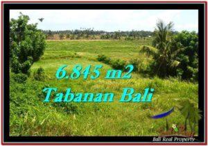 TANAH MURAH JUAL di TABANAN BALI 6,845 m2 View sawah dan laut