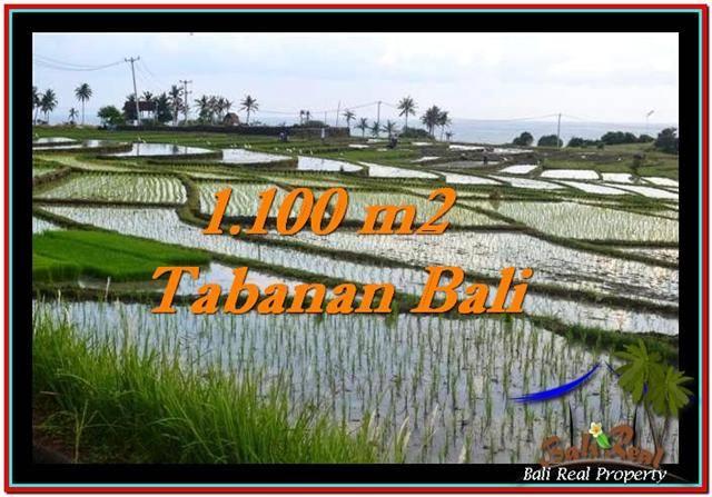 TANAH MURAH JUAL di TABANAN BALI 1,100 m2  View sawah, laut dan gunung