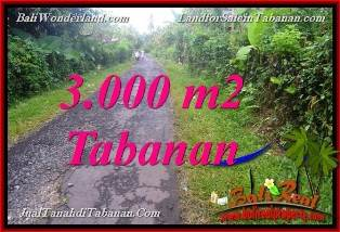 DIJUAL TANAH MURAH di TABANAN BALI Untuk INVESTASI TJTB366