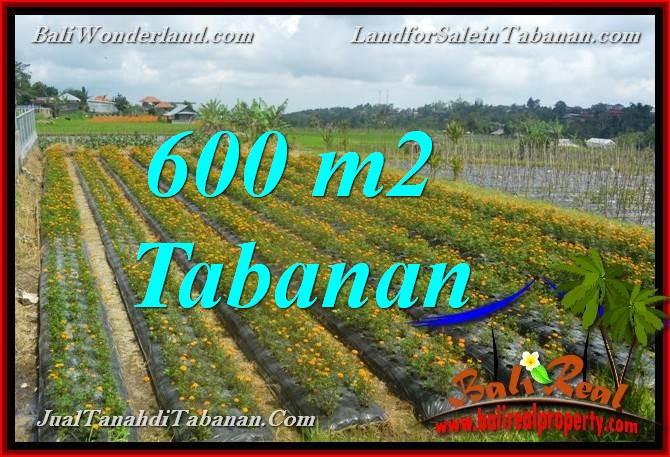 TANAH MURAH DIJUAL di TABANAN BALI 600 m2  view kebun dan Gunung
