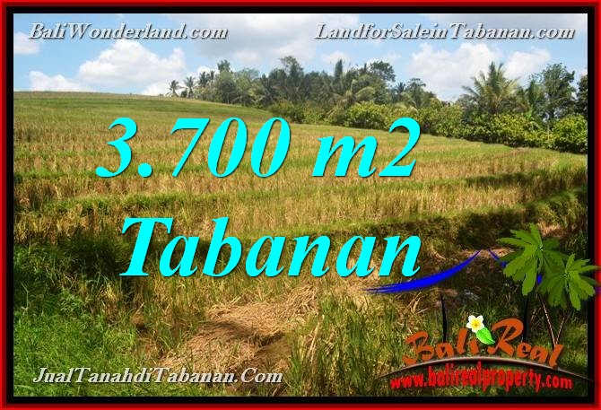 JUAL TANAH DI TABANAN BALI 3,700 m2 di Tabanan Selemadeg