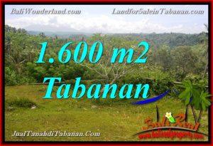 JUAL MURAH TANAH di TABANAN 1,600 m2 View gunung dan sawah