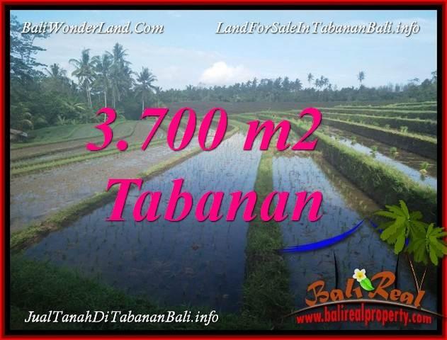 TANAH DIJUAL MURAH di TABANAN BALI 3,700 m2 di TABANAN SELEMADEG
