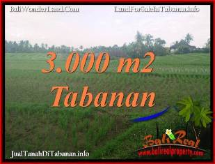 JUAL TANAH DI TABANAN BALI 3,000 m2 di TABANAN SELEMADEG
