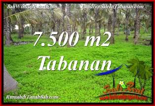 TANAH di TABANAN BALI DIJUAL MURAH 7,500 m2 di TABANAN SELEMADEG