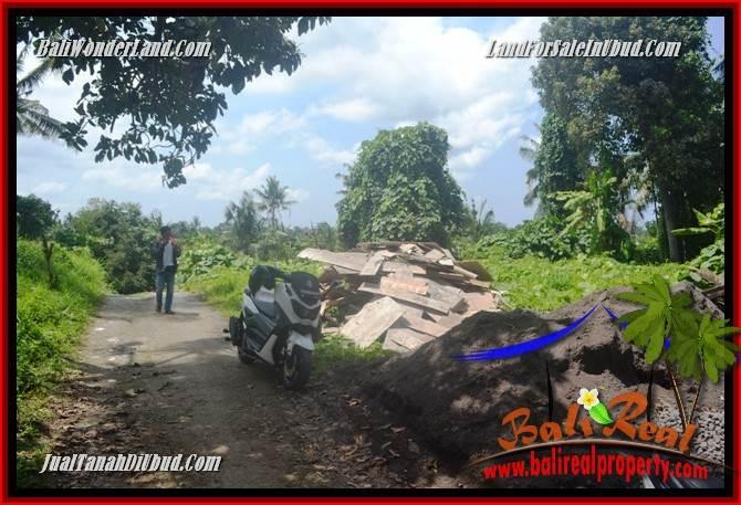 Tanah Murah di Ubud Bali Dijual 4 Are di Sentral Ubud