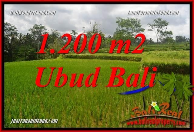 Tanah Murah di Ubud Bali 12 Are View sawah, lingkungan Villa