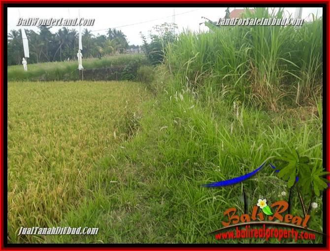 Investasi Property, Tanah Murah di Ubud Dijual TJUB695