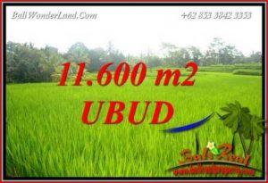 Tanah Murah di Ubud Bali Dijual 11,600 m2 View sawah, tebing dan sungai