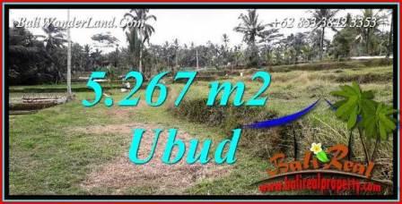 Tanah Murah Dijual di Ubud Bali Untuk Investasi TJUB743