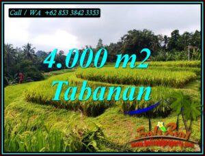JUAL TANAH MURAH di TABANAN 40 Are di PENEBEL TABANAN