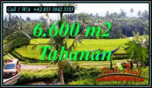 JUAL TANAH DI TABANAN BALI 66 Are di PENEBEL TABANAN