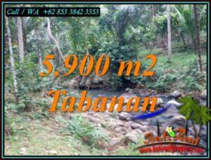 JUAL TANAH MURAH di TABANAN 59 Are di SELEMADEG TABANAN
