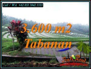 JUAL TANAH MURAH di TABANAN 3,600 m2 VIEW SAWAH